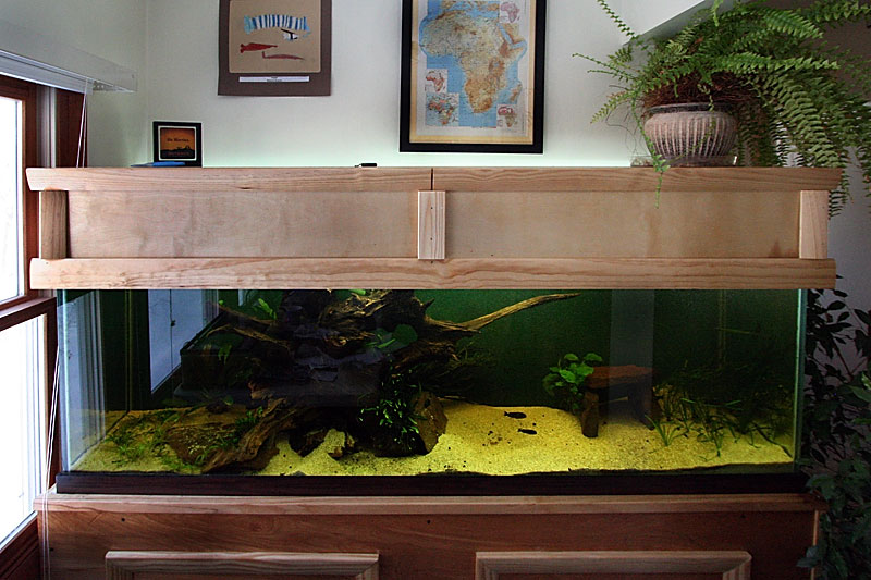 Cichlid Forum O Help 125 Gallon Lighting