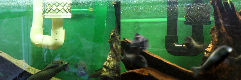 PVC overflow before (left) and after (right) dying with RIT & Cichlid-Forum u2022 dying pvc help
