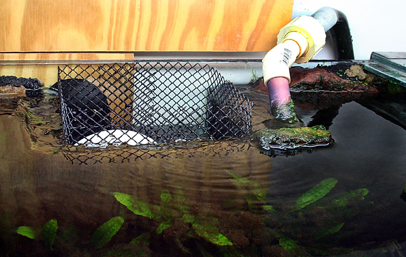 Cichlid Forum Leaking Over Flow Chamber