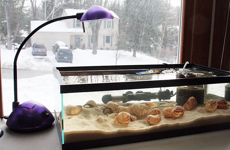 Cichlid-Forum • smallest tank for pair or trio of shell-dwellers? 10 Gallon Fish Tank Ideas