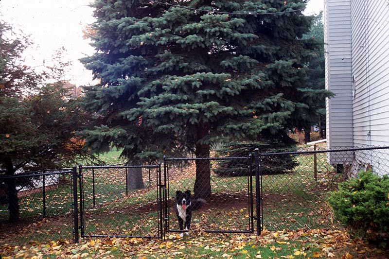 1-Jodys-new-fence.jpg