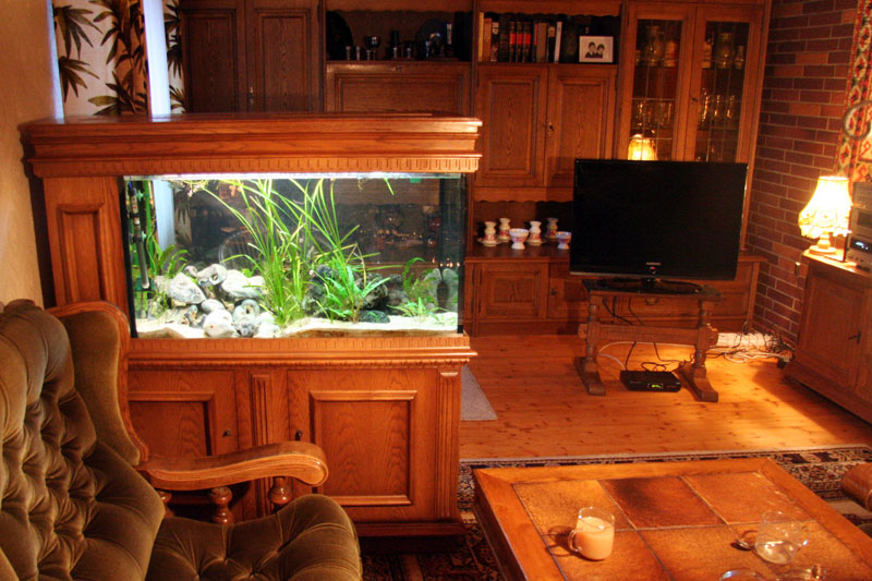 fish tank in living room bing images